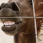 jaderbomb-horse