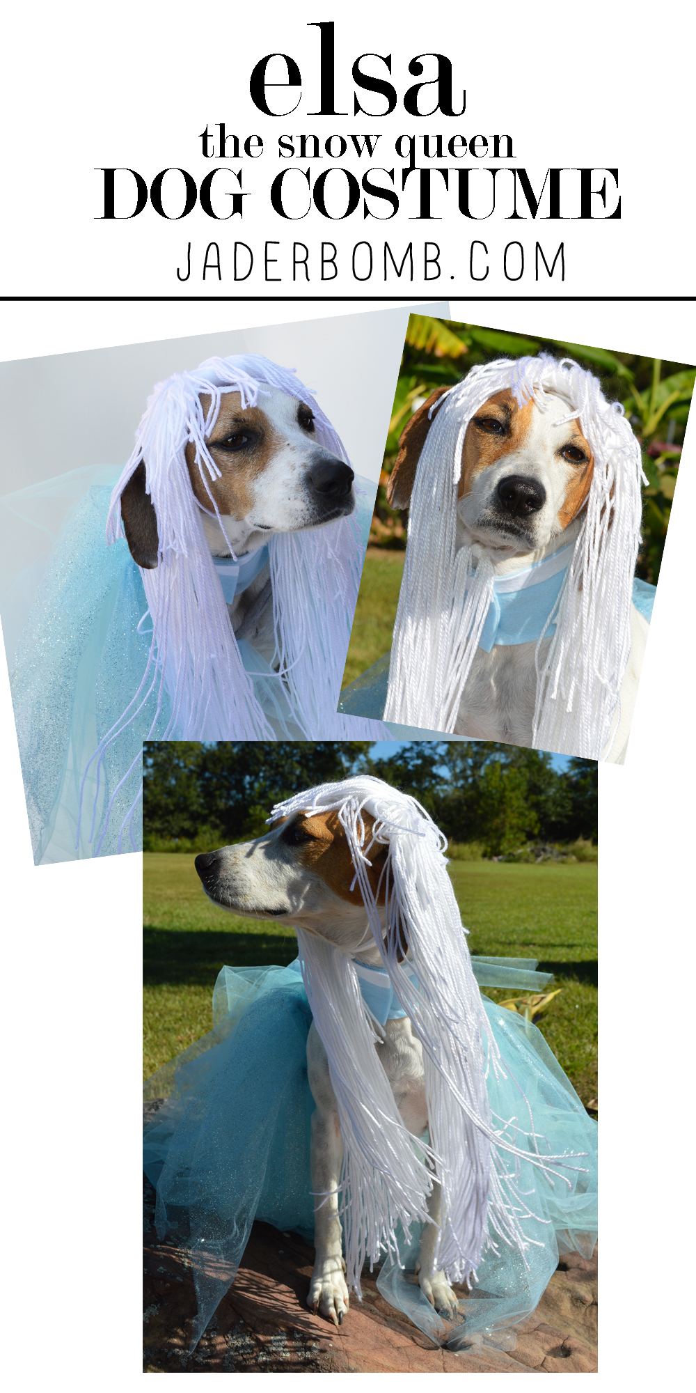 homemade halloween costume for dogs
