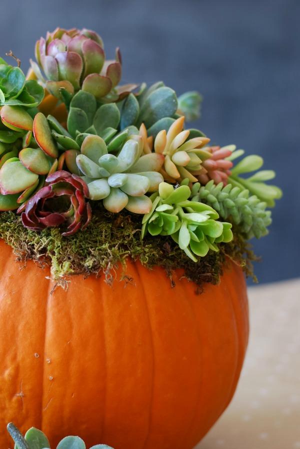 Pumpkin-Succulent-Arrangement-simplyhappenstance.com-136