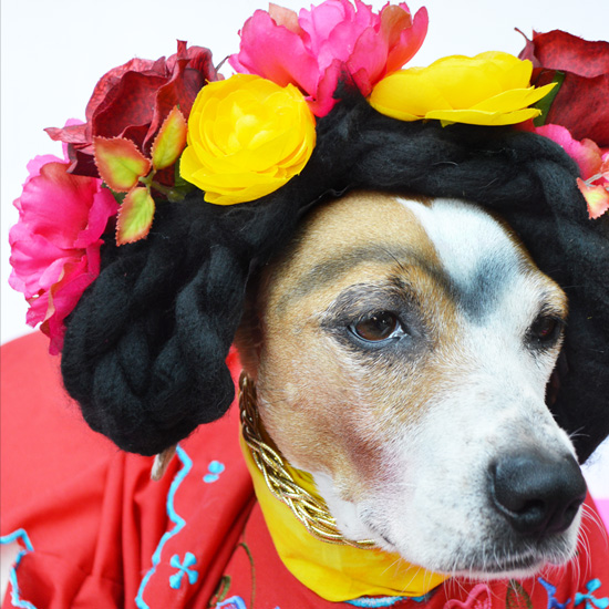 Frida kahlo dog costume diy halloween dog costume solutioingenieria Choice Image